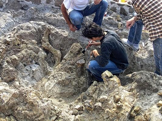 Συντήρηση απολιθωμάτων από μαθητές.
