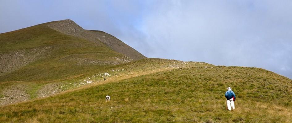 Δυο φιλικά σκυλιά και απέναντι μας η διαδρομή προς την μύτη ανώνυμης κορηφής