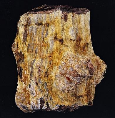 Τμήμα απολιθωμένου κορμού.