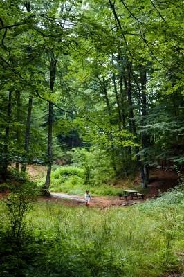 Δάση οξυάς