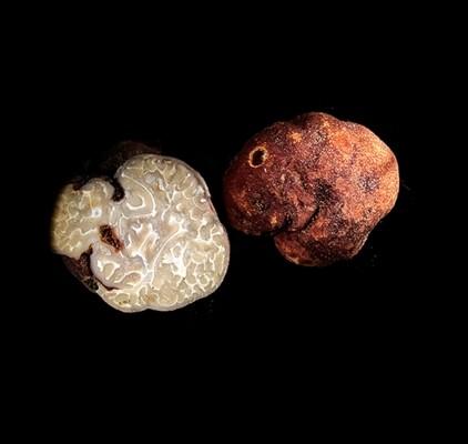Tuber rufum – Οίδημα το ερυθρό