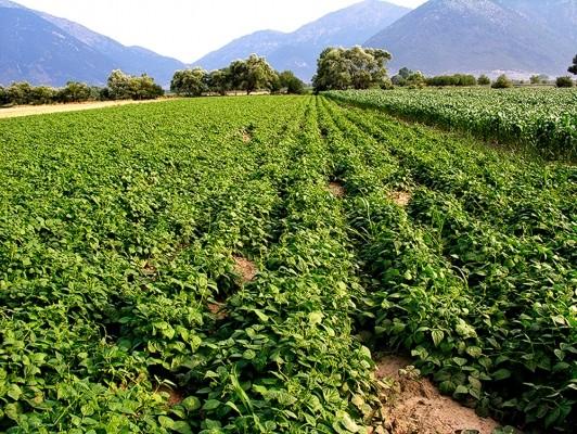 Το εύφορο οροπέδιο του Φενεού είναι φημισμένο για την εξαίρετη ποιότητα οσπρίων και σιτηρών.