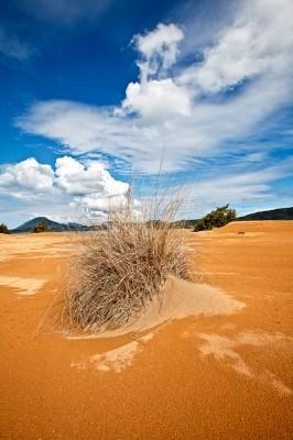 Τμήμα της Ερήμου στην Λιμνοθάλασσα Κορισσίων.