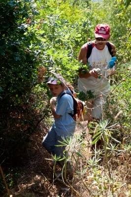 Ο Σταμάτης Σταματίου ανοίγει με το κλαδευτήρι του δρόμο στη ζούγκλα.