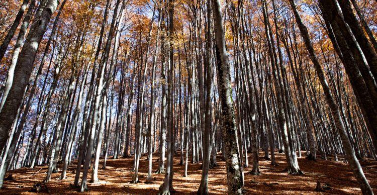 Παρθένο δάσος Χαϊντού