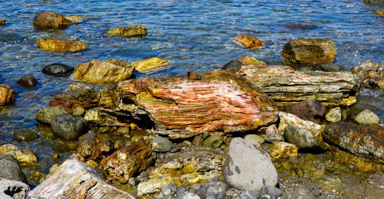 Θαλάσσιο Πάρκο Απολιθωμένου Δάσους Νησιώπης