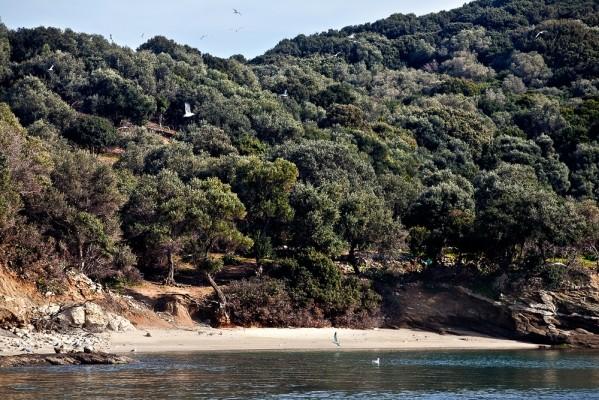 Η μικρή παραλία του κατάφυτου με ελιόδεντρα λόφου του Λιοτοπιού.