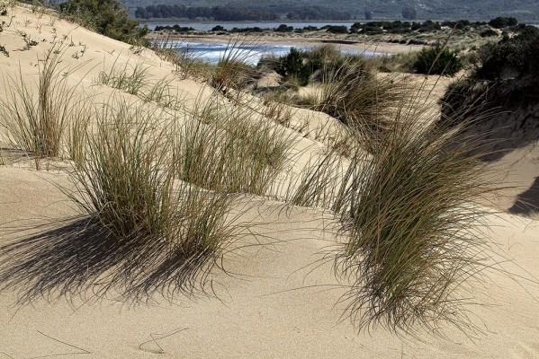 Αμμοθίνες πάνω από τη Γιάλοβα.