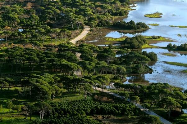 Δάσος κουκουναριάς