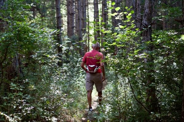 Καθώς αρχίζει το δάσος των πεύκων το μονοπάτι γίνεται επίπεδο, χωμάτινο, μαλακό