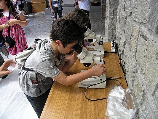 Μαθητές παρατηρούν σύγχρονα και απολιθωμένα φυτά,