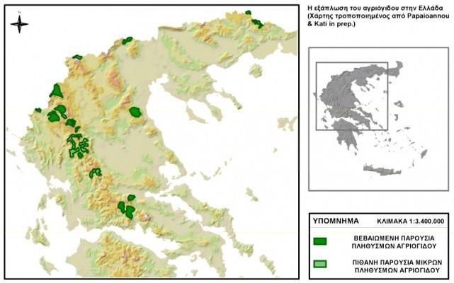 Τα 700 αγριόγιδα που έχουν απομείνει στην Ελλάδα προσπαθούν,  σε πείσμα κυρίως του ανελέητου λαθροκυνηγιού, να κρατήσουν τους τελευταίους είκοσι πυρήνες εξάπλωσής τους. Θα τα καταφέρουν άραγε;