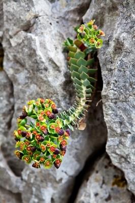 Δείγματα από την πλούσια και ιδιαίτερη χλωρίδα της περιοχής