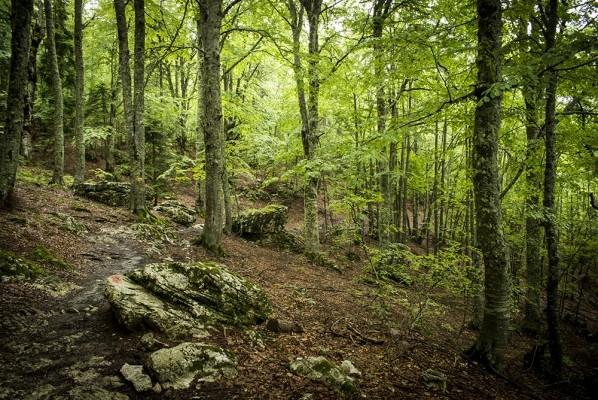 Το δάσος της Σιωπής