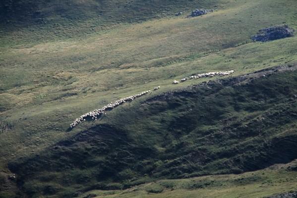 Στα λιβάδια της Αετομηλίτσας καθώς κατηφορίζουμε προς Πέτρα Μούκα.