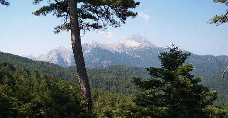 Κατακτώντας την καρδιά του Δάσους της Βασιλικής