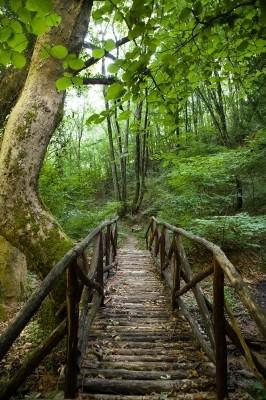 Γεφυράκι που οδηγεί στον καταρράκτη