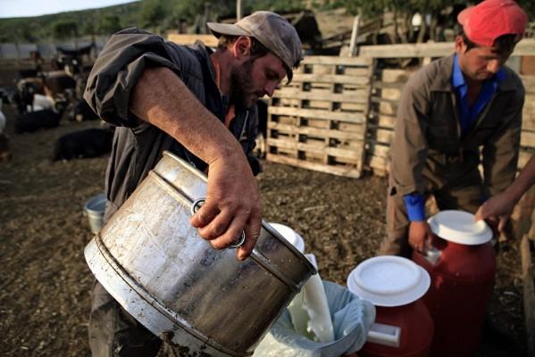 Το γάλα μεταφέρεταο απο τους κάδους στα γκιούμια