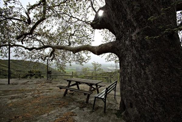 Ο αύλειος χώρος με το γιγάντιο πλατάνι στο μοναστήρι του Ιωάννου του Προδρόμου