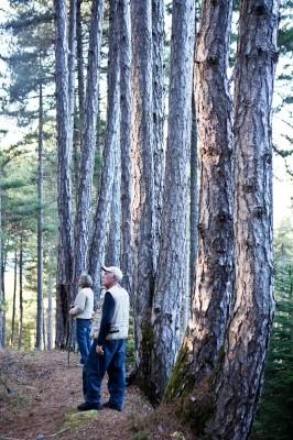 Στο δάσος των εκπληκτικών μαυρόπευκων του Άμπουλα.