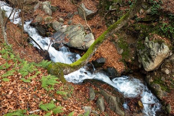 Το κεντρικό ρέμα που διασχίζει το δάσος.