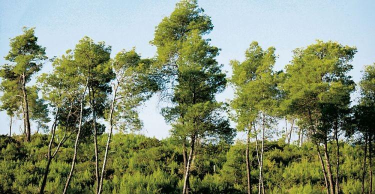 Το Δάσος της Φολόης