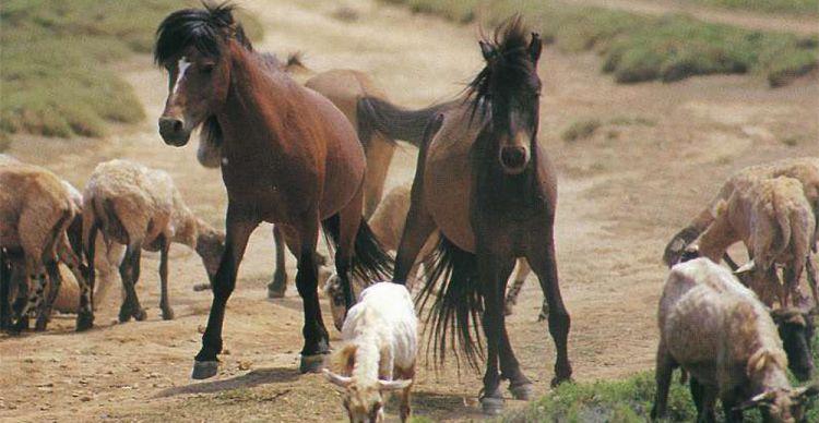 Τα αλογάκια της Σκύρου