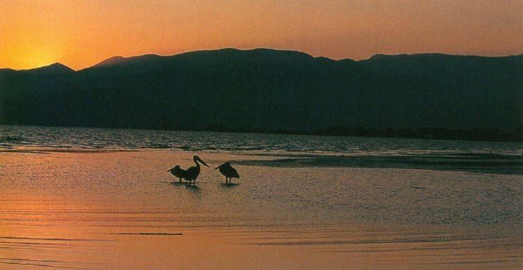 Αργολίδα. Υδροβιότοπος Ν. Κίου - Ναυπλίου