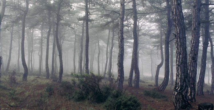 Εθνικό Πάρκο Δάσους Δαδιάς - Λευκίμης - Σουφλίου