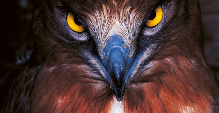 Τα πουλιά του Έβρου