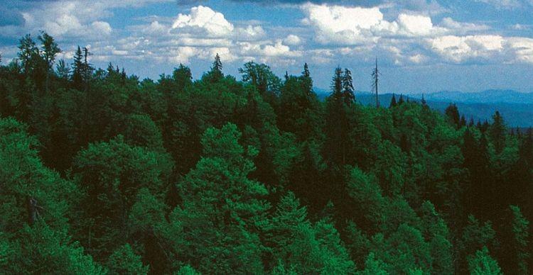 Παρθένο Δάσος Φρακτού Δράμας