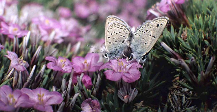 Oι πεταλούδες της Ελλάδας